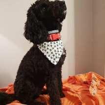 Doggy bandannas £15