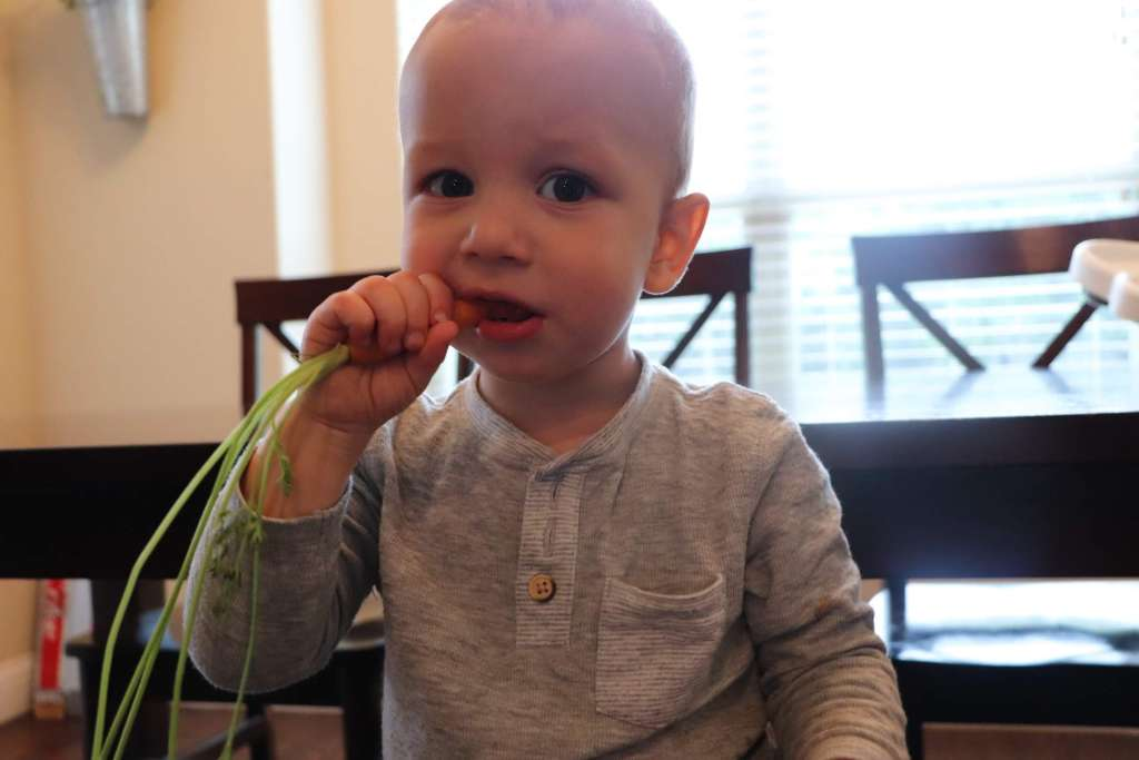 Baby eating carrot. How to start baby led weaning. If you've decided to try out BLW you may not know how to start baby led weaning. These tips and guide will teach you how to start baby led weaning the best way!