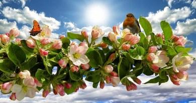 com a benção de Deus, flores e frutos florescerão!