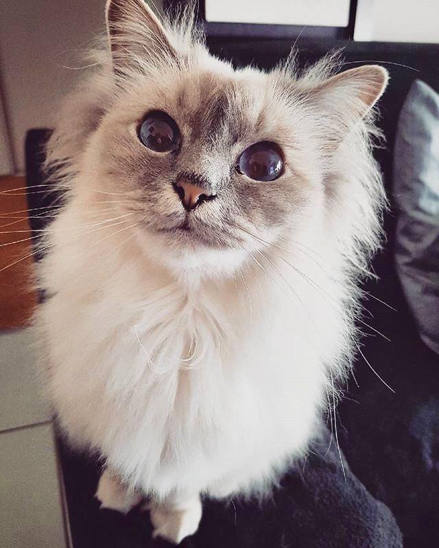 découvrez les jouets chics et tendances pour chats : les Minitriplos / Interview créateur made in france