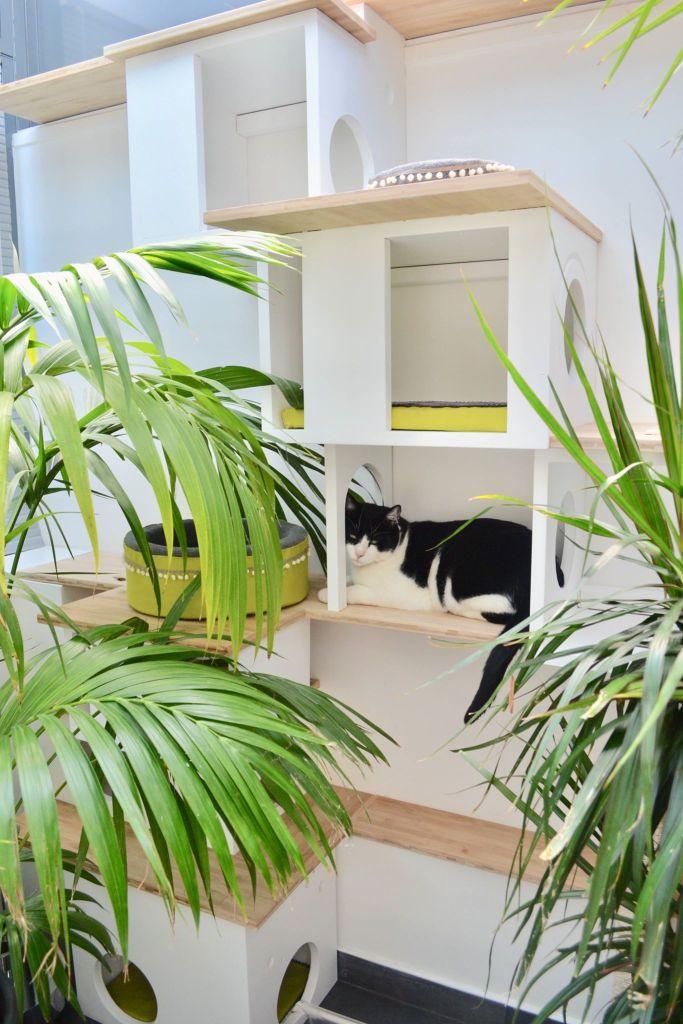 interview de Gégène the cat + avis sur la souribambelle, jouet pour chat artisanal