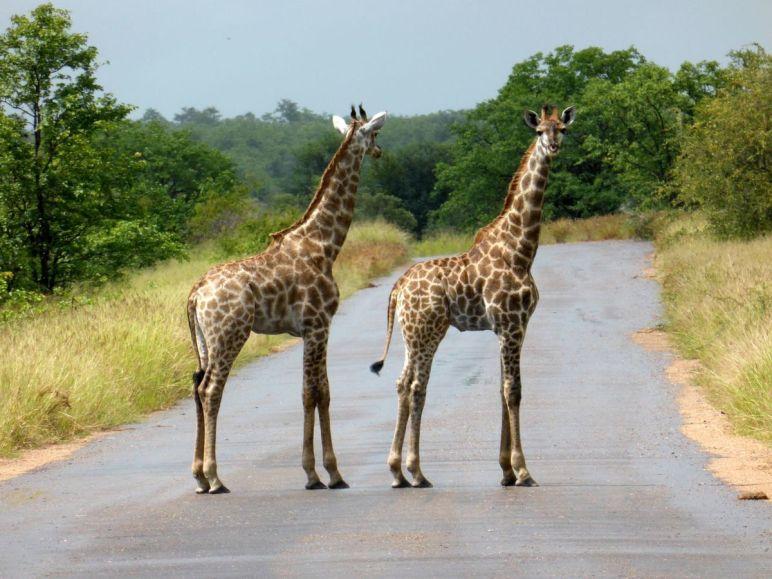 Visite en Afrique du Sud