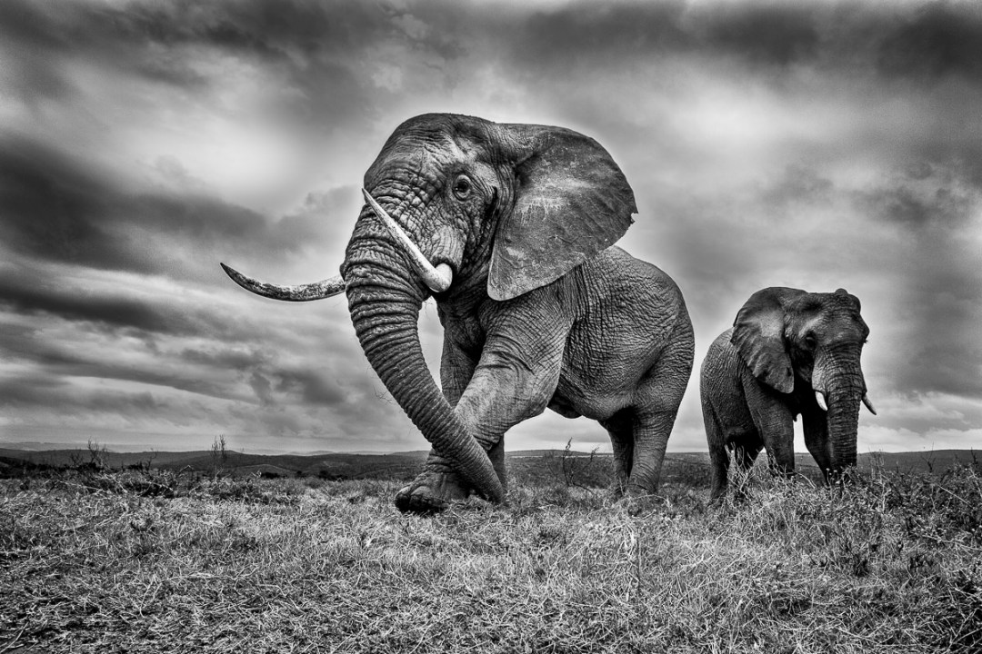 An image from Conflict and Light - Elephant