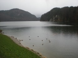 Ducks in the Alpsee