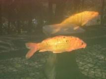 Fish in the oriental garden