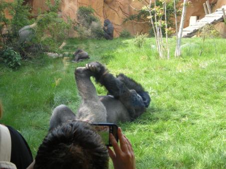 Gorilla yoga
