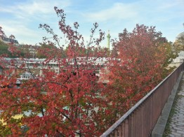 Pretty red leaves