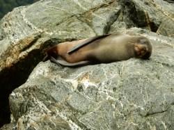 SEAL!!