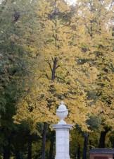 Petersplatz trees