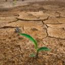 Resiliencia: 5 habilidades para afrontar adversidades