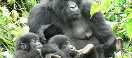 2-days-congo-safari