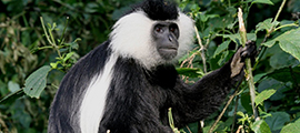 7-days-primate-safari