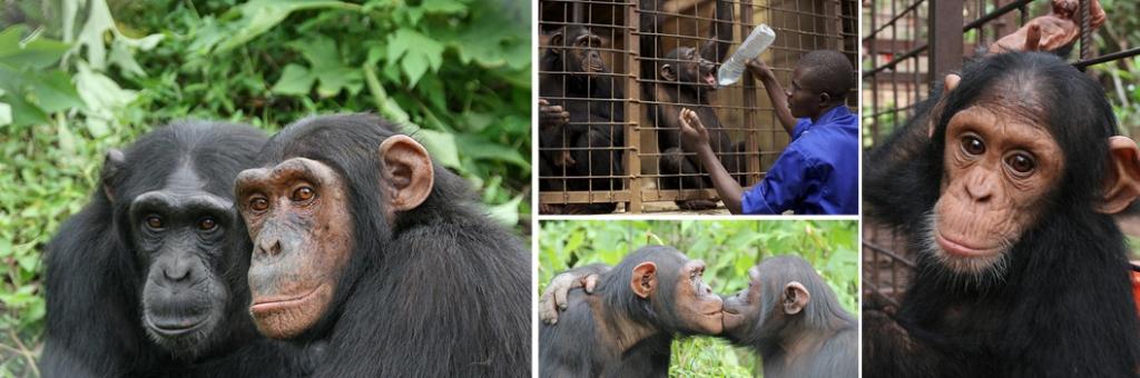 lwiro-primate-rehabilitation-centre