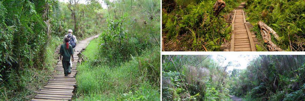 bigodi-wetland-tour-kibale-uganda