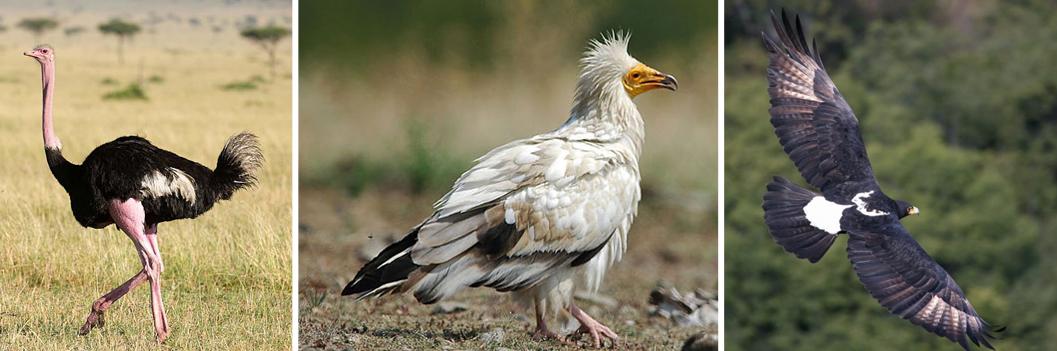 birds-in-kidepo-valley