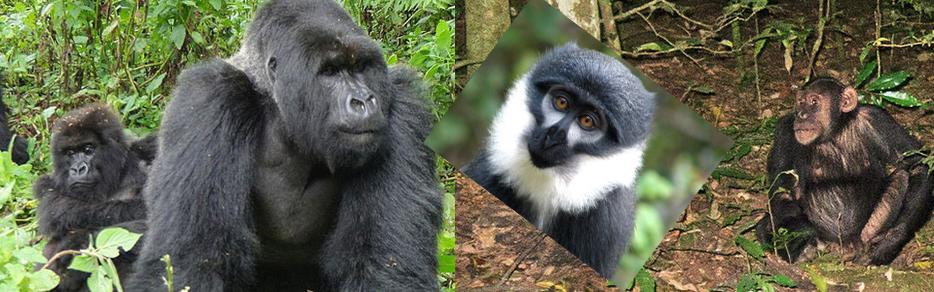 bwindi-wildlife-uanda-safari-tour