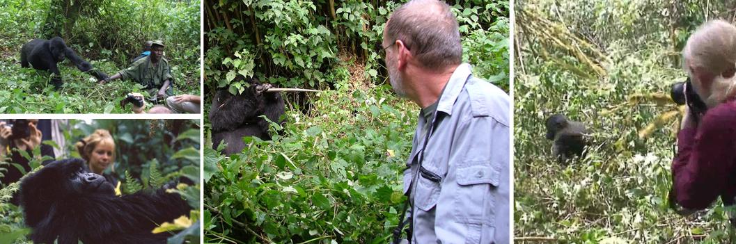 gorilla-trekking-uganda-safari