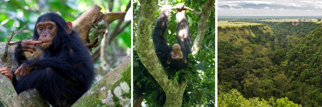 kyambura-gorge-chimpanzee