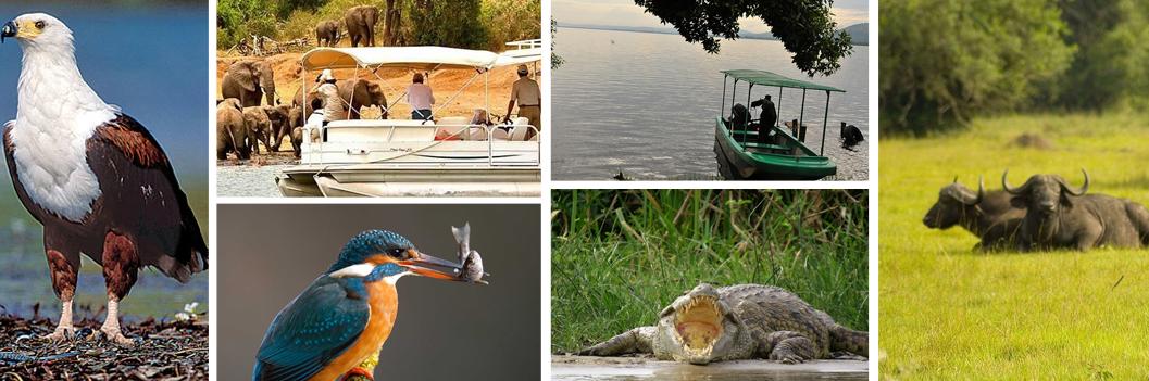 lake-mburo-boat-cruise