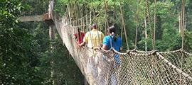 rwanda-canopy-walk