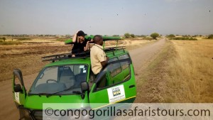 10 days Uganda gorilla trekking safari & Mount Nyiragongo hiking tour Congo