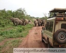 9 days gorilla trekking safari Congo & wildlife tour in Rwanda