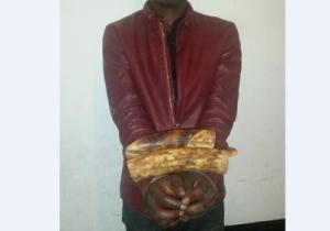Justice : 3 présumés délinquants fauniques vont comparaitre à Owando et Pointe Noire