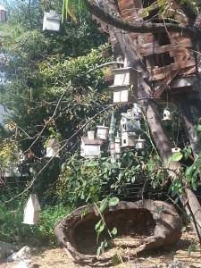 "Our ""neighbor"" has quite a birdhouse collection."