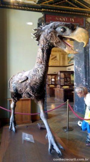Paraphysornis brasiliensis. Museu de História Natural de Viena.