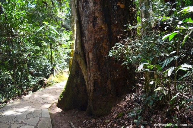 Arenitos de Vila Velha em Ponta Grossa - PR. Trilha no bosque. Foto: Maria Eugênia.