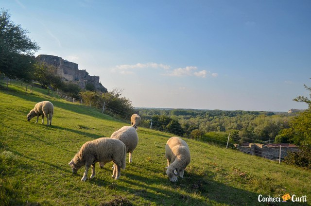 Ovelhas no caminho para o Castelo Devín, Eslováquia