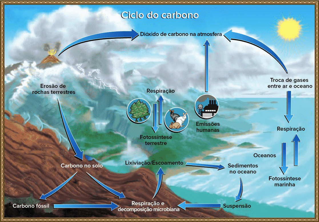 Ciclos Biogeoquimicos Saiba O Que Sao E Como Eles