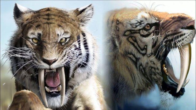 Tigre-dente-de-sabre: quando viveram? Quais suas características?