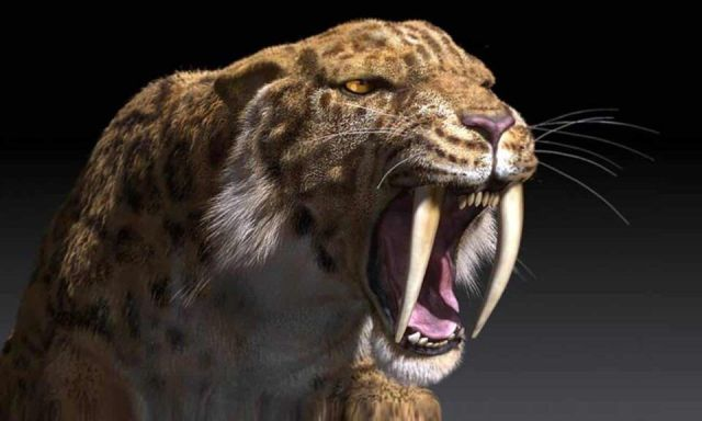 Tigre-dente-de-sabre – Característica, comportamento e extinção do animal