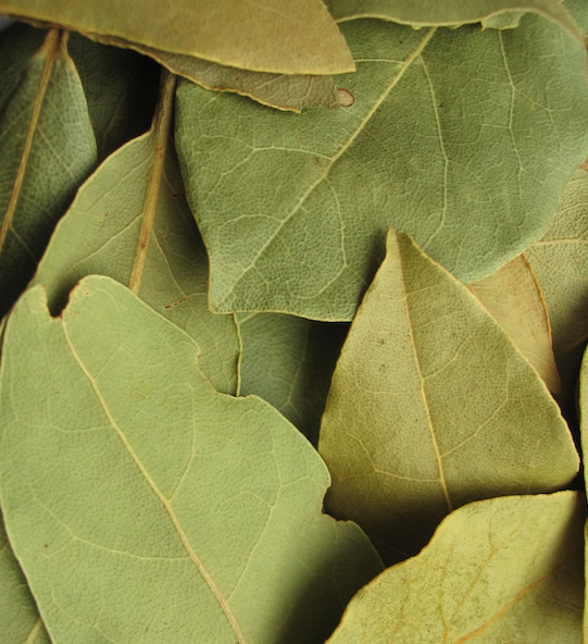 Bay Leaf, Laurus nobilis at Conjure Work, Pagan witchcraft supplies by Magus, Kevin Trent Boswell