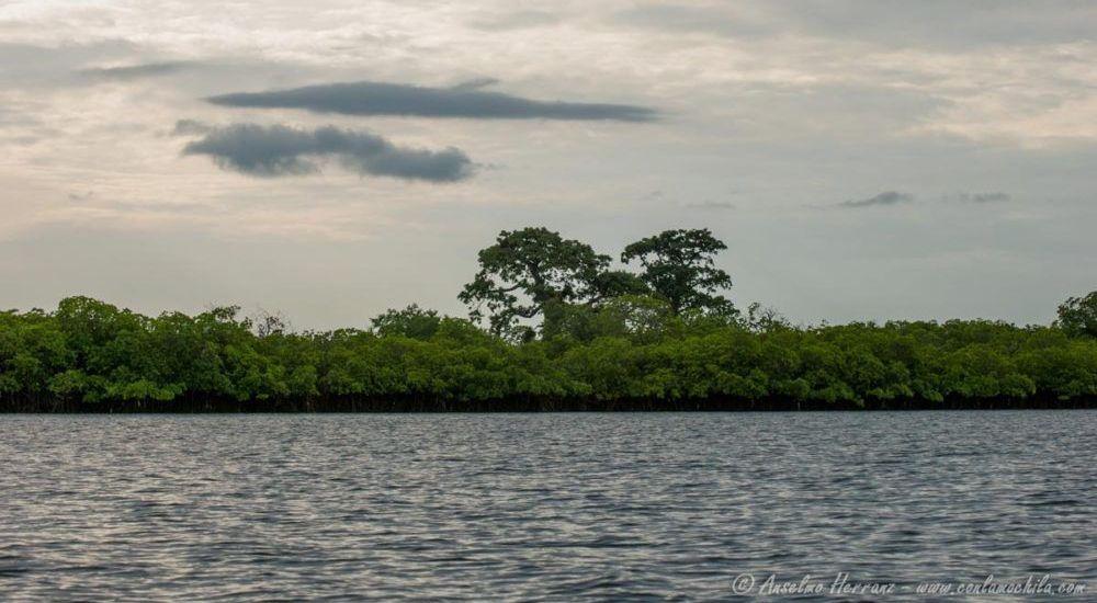Delta del Saloum - Toubakouta - Senegal