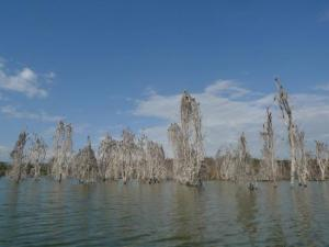 Lago Neivasha - kenia