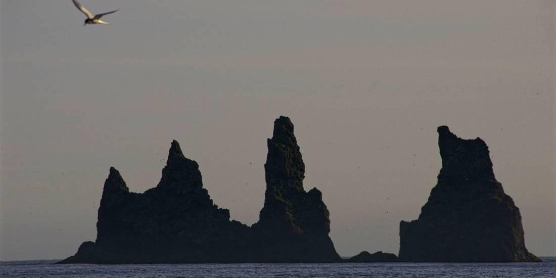 Reinisdrangar, Trolls de Piedra, Vik - Islandia (Foto: Raúl Vega)
