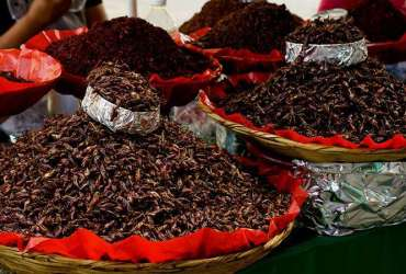Chapulines en un mercado local de México