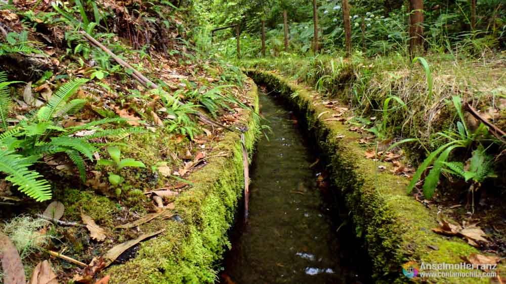 Detalle de la Levada Pico das Pedras - Madeira - Portugal