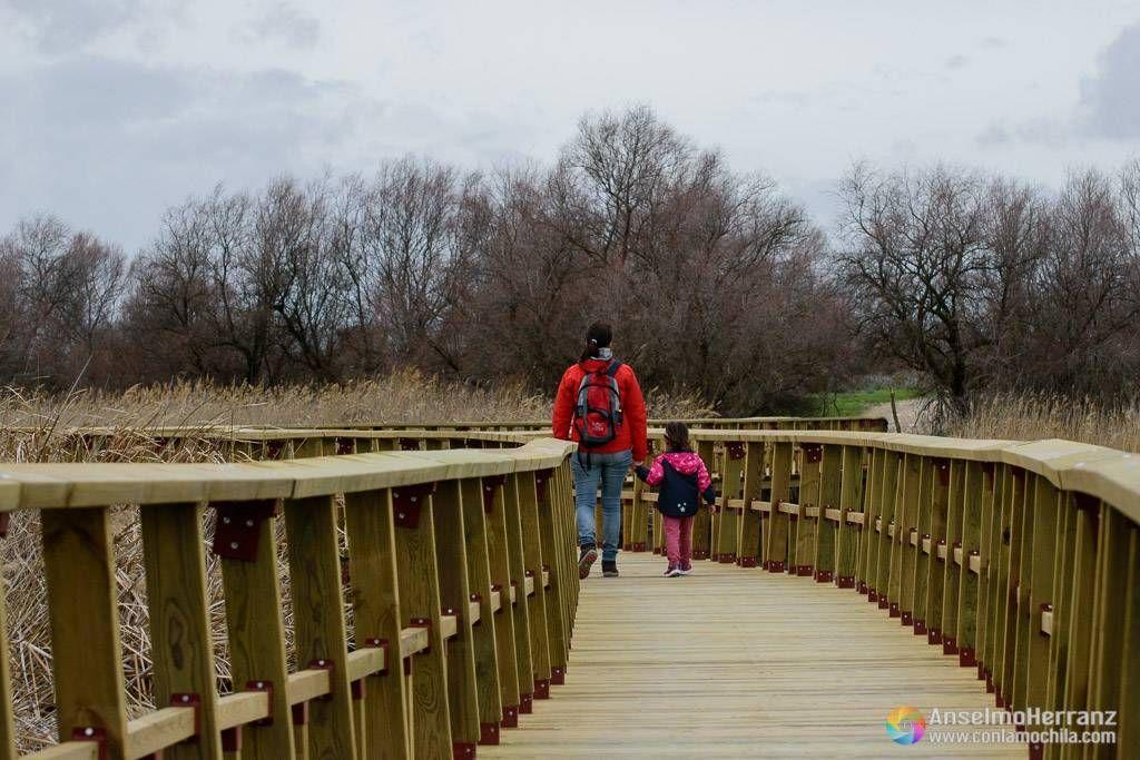 Una de las pasarelas que recorren Las Tablas de Daimiel - Ciudad Real - Castilla la Mancha - España