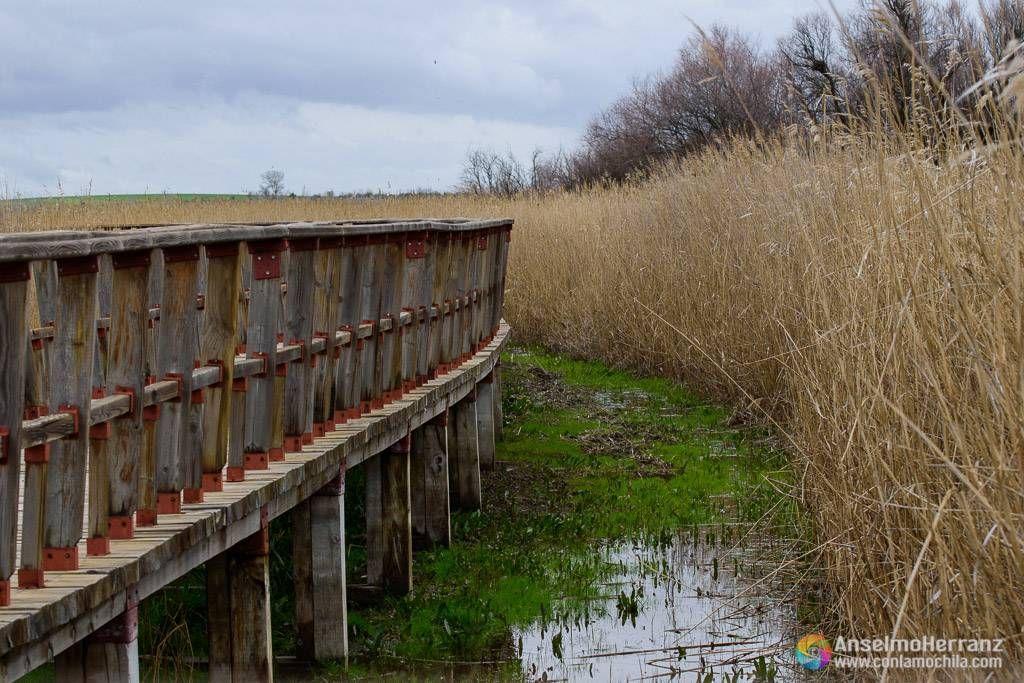 Pasillo de madera que lleva a uno de los miradores entre la Isla del Descanso y la Isla del Pan - Tablas de Daimiel - Ciudad Real
