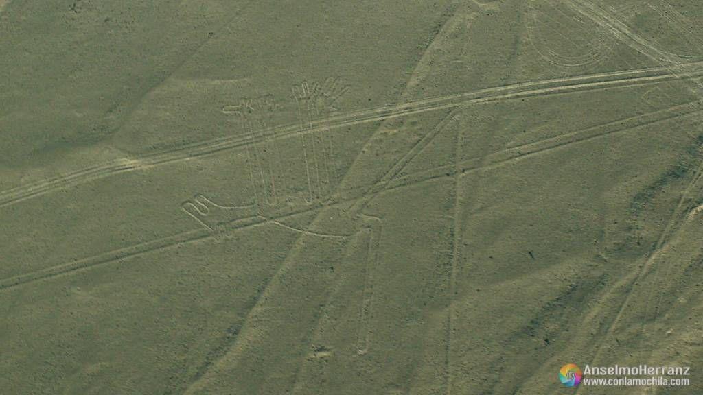 El perro - Líneas de Nazca - Perú