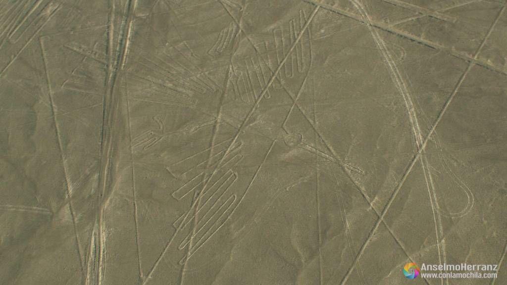 El condor - Líneas de Nazca - Perú