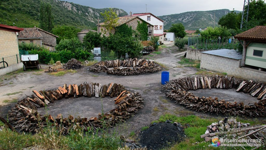 Carboneras en su primera fase - Viloria - Sierra de Urbasa - Navarra