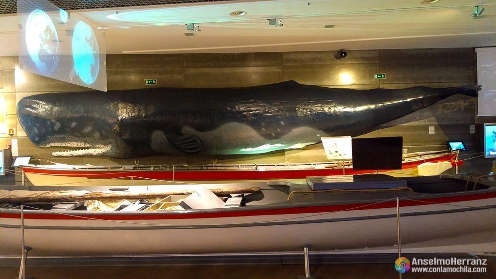 Reproducción de ballena y embarcación real - Museo de la Ballena de Madeira - Caniçal