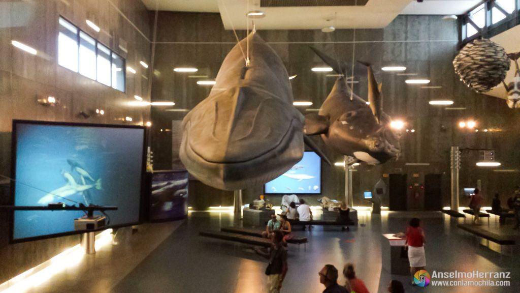 Reproducción de ballenas a escala - Museo de la Ballena de Madeira - Caniçal