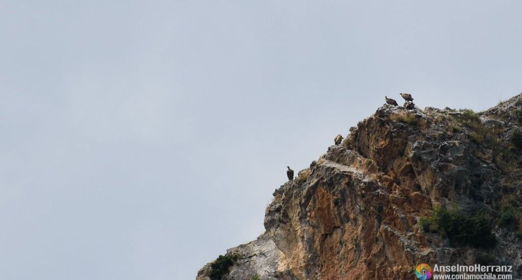 Buitres observados desde el Mirador del Buitre - Arnedillo - La Rioja