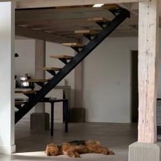 Middenboom trap met Hond
