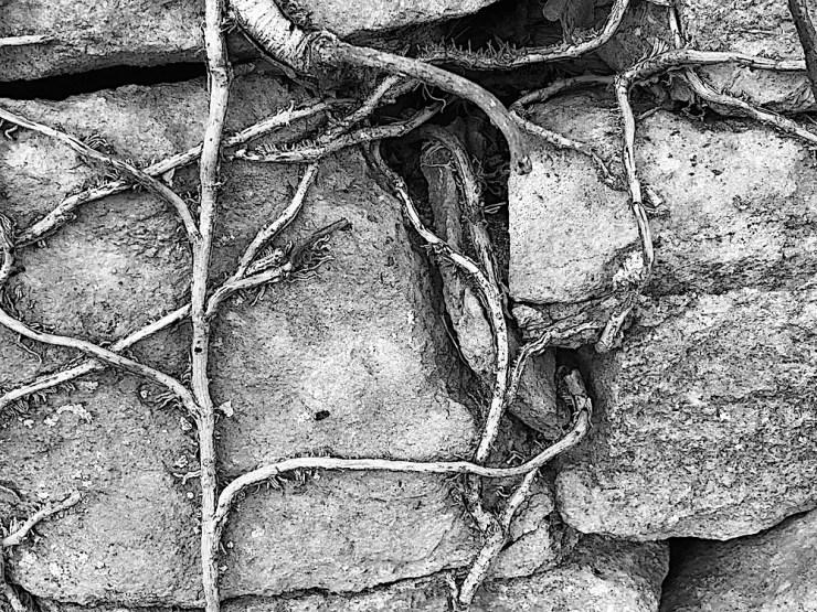Webs of relationships